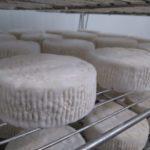 formatges riudavets formatgeria artesanal catalans proximitat cabra ovella vaca llet crua Roger